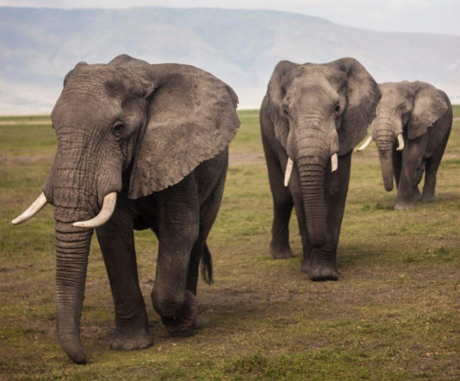 Student & Budget Safari Packages   Affordable African Safari